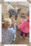 girls-feeding-goats2