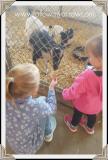 girls-feeding-goats2