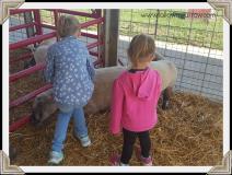 girls-sheep2