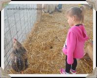 taylor-chicken2