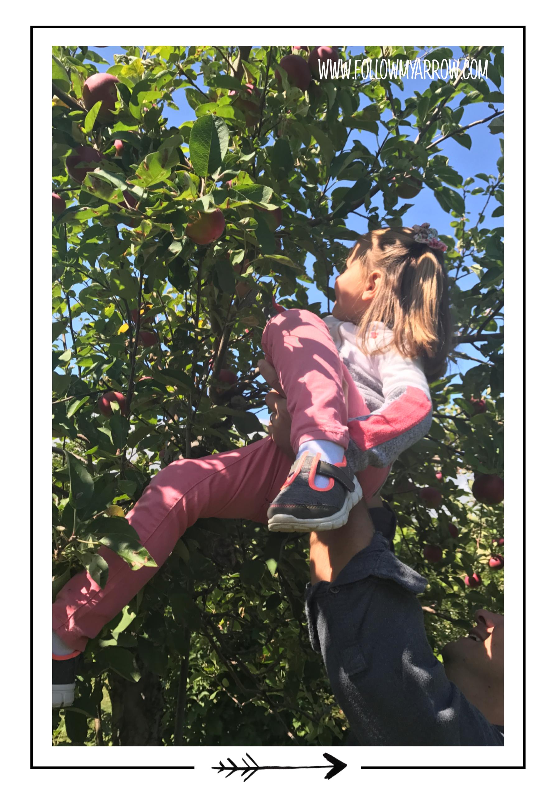 FMA-Apple-Taylor-Tree