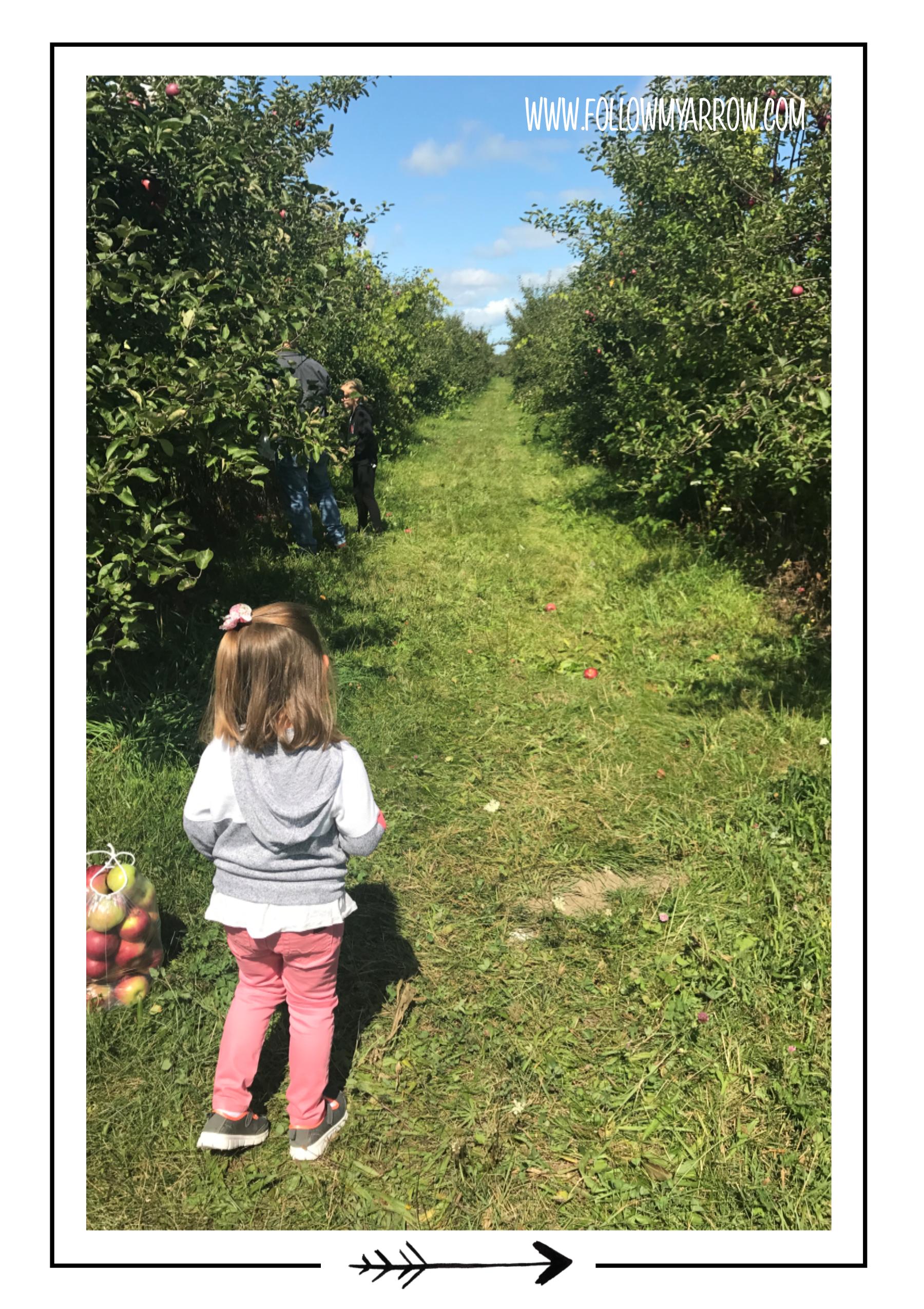 FMA-Apple-trees2