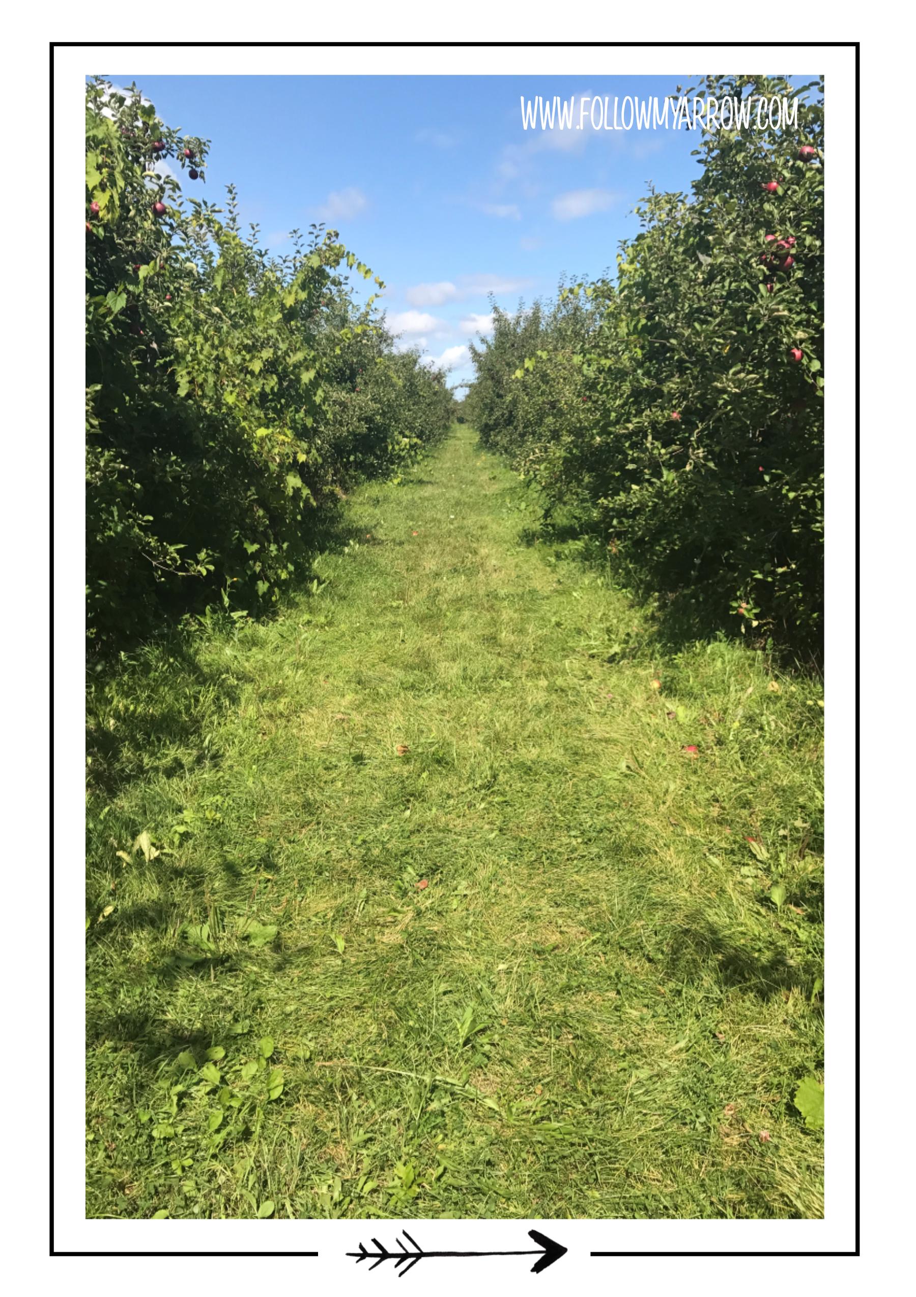 FMA-Apple-trees-