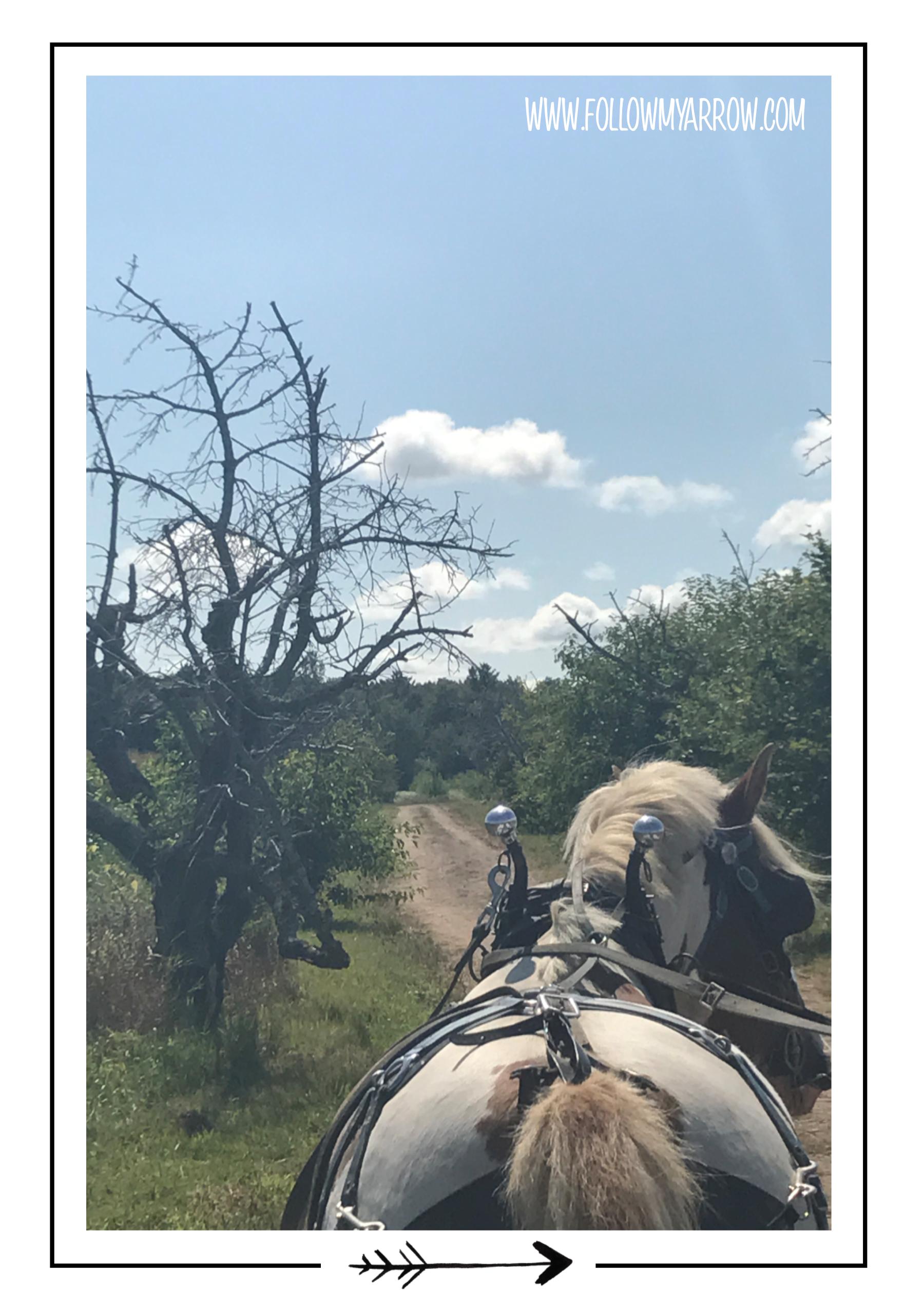 FMA-Apple-Wagon-Horse