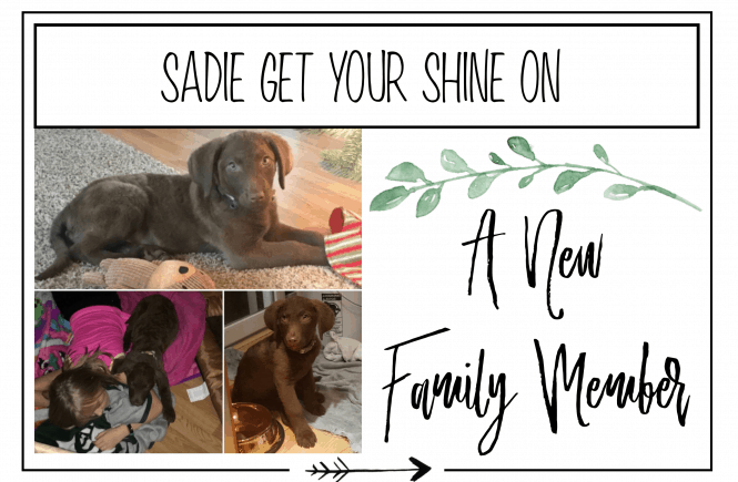 FMA Featured new family member