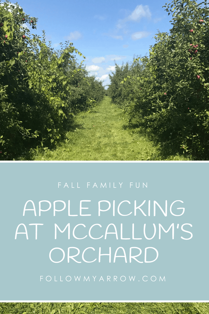 APPLE PICKING AT  MCCALLUM'S ORCHARD