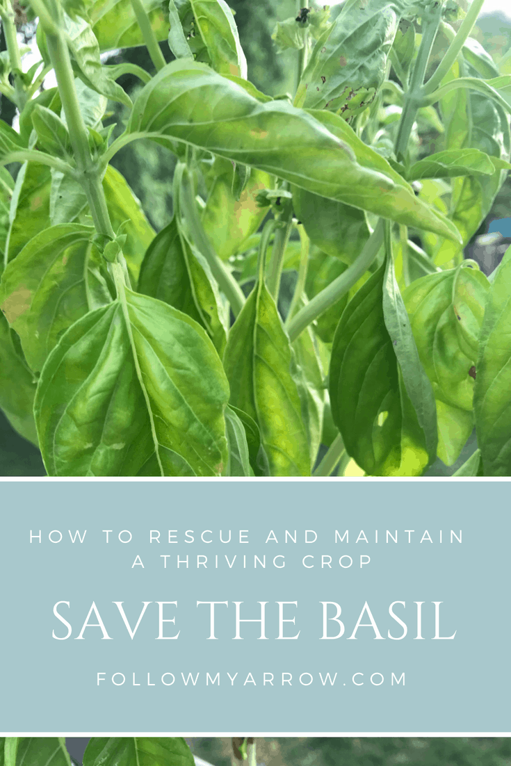 Save the basil