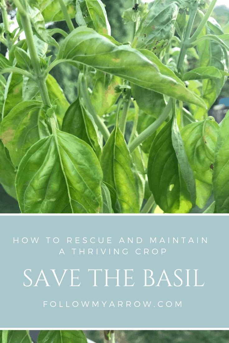 Save the basil